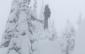 Advance Revision Skis