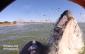 paddle baleine