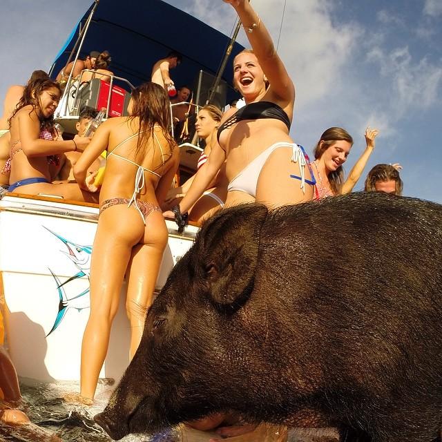 kama-surfing-pig-gopro-hawaii-gstring-thong